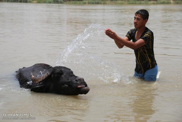 Buffalos, children's playmates