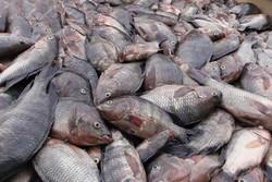 Tehran, Paris to bolster coop. in aquaculture