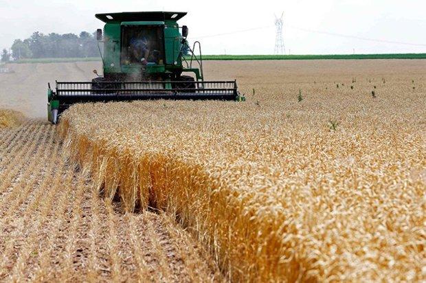 ۱۵ هزار تن از گندم  زنجان به استانهای دیگر صادر شده است