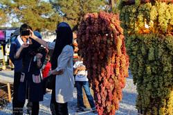 """مهرجان """"عناقيد العنب"""" في مدينة """"أرومية"""""""