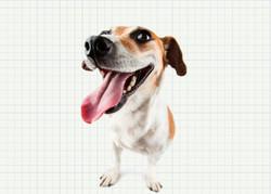 اینفومهر چرا جای سگها در خانه نیست؟