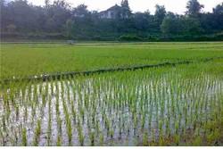 آبیاری کشاورزی