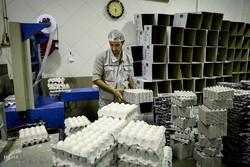 پیش بینی تولید ۹۵۰ هزار تن تخم مرغ در سال جاری