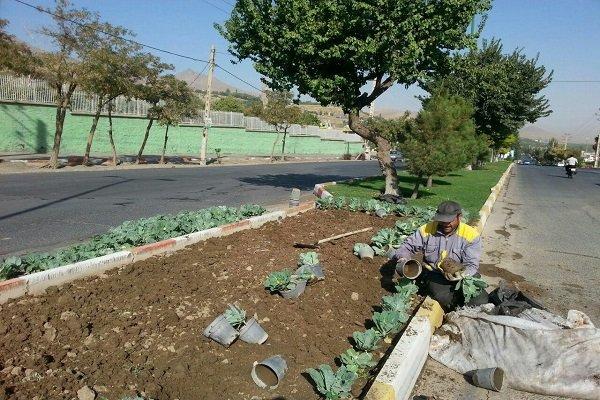 ۲۰ هزار بوته انواع گل فصلی در مریانج کاشته میشود
