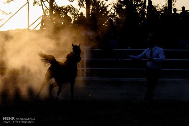 هشتمین جشنواره ملی زیبایی اسب اصیل عرب در استان البرز