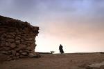 جایزه بهترین فیلم مستند جشنواره نیواورلئان به «بَرد» رسید