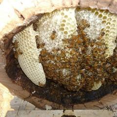 کشف یک تن و ۲۰۰ کیلوگرم عسل تقلبی در بردسکن