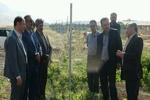احداث ۲ واحد گلخانهای تولید محصولات خارج از فصل در هرسین
