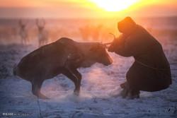 سیبری قبائل کے ہمراہ زندگی