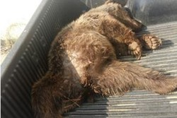Man faces 2 years in prison, $14000 fine for killing brown bear
