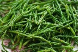 نمک سبز سالیکورنیا