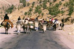 عشایر آذربایجان غربی بیش از ۵۰۰ میلیارد ریال متضرر شدند