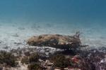 کشف شهر اختاپوس ها در استرالیا