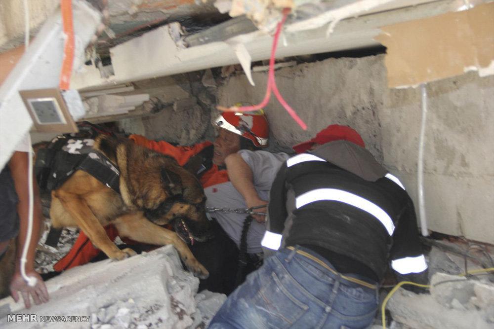 مدیر مرکز نگهداری سگهای تجسس هلالاحمر: سگهای خانگی خود را برای جستجو به مناطق زلزلهزده نیاورید