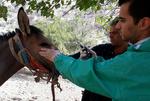 انجام بیش از۷۰۰ تست مالئین در باشگاههای پرورش اسب استان کرمانشاه