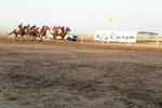 ۵۹ راس اسب در هفته دوم کورس پاییزه آق قلا رقابت میکنند