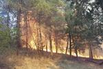 آتش سوزی جنگل های شرق گلستان - کراپشده