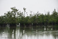 احیای حیات طبیعی تالاب استیل آستارا با بارش مداوم باران