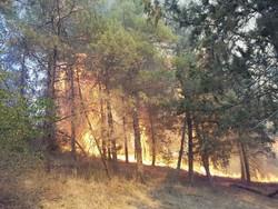 آتش سوزی جنگل های پاسارگاد ۱۰۰ درصد کاهش یافته است