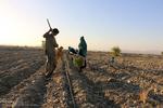 سالانه ۱۵۰ هکتار اراضی زراعی آران و بیدگل باید به باغ تبدیل شود