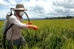 سمپاشی علیه سن غلات در ۱۴۹ هکتار از مزارع گندم و جو بهار