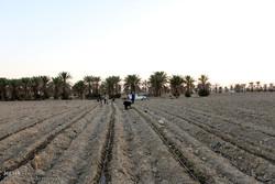 پرداخت تسهیلات اشتغال به کشاورزان برای راهاندازی آب شیرین کن