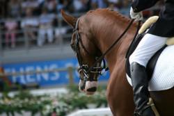 نخستین همایش حرکات نمایشی اسب در فرخ شهر برگزار می شود