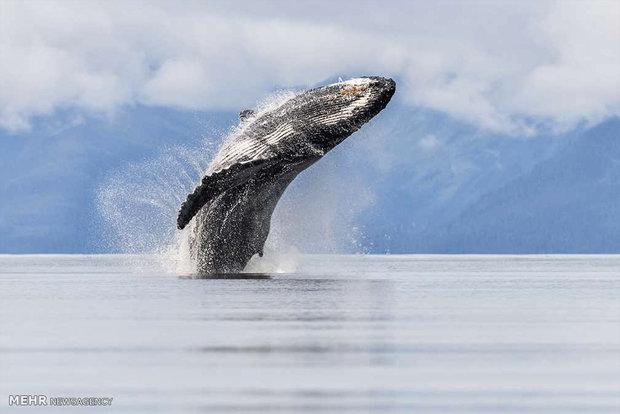 عکس های مسابقه طبیعت نشنال جغرافیک