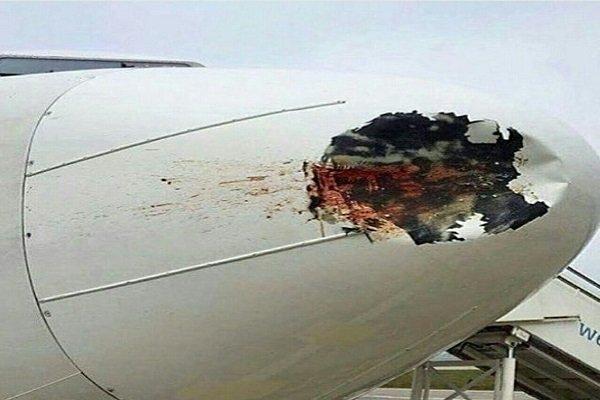 تصادف پرنده با هواپیما