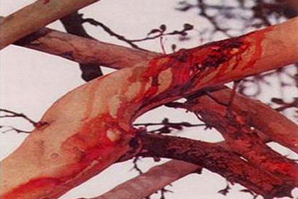 درخت خونبار
