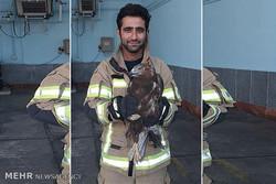 عقاب عصبانی به دام آتش نشانان افتاد