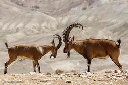 اس ہفتہ میں جنگلی حیوانات کی منتخب تصویریں