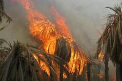 خسارت ۳ میلیارد تومانی به نخلستانهای شهرستان بستک