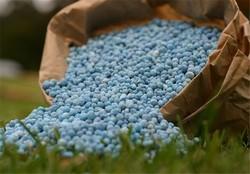 ۸۵ درصد کود مورد نیاز در داخل تولید میشود/ کود داخلی را ۳ برابر نوع وارداتی آن میخریم