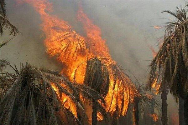 آتش سوزی به ۱.۲ هکتار نخیلات بخش شهداد خسارت ۱۰۰ درصدی وارد کرد