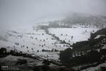 بارش برف در ارتفاعات شمالی البرز/ وقوع یخبندان صبحگاهی