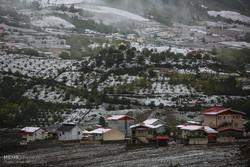 بارش برف در ساری