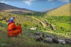 ۱۲ ایل آذربایجان غربی راهی مناطق ییلاقی شدند/زندگی با طعم طبیعت