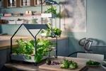 طراحی مزرعه های کوچک خانگی برای پرورش سبزیجات