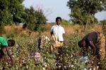سازمان تجارت جهانی کشورهای فقیر را با شکست روبرو کرد