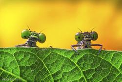 عکس های مسابقه انجمن بیولوژی انگلیس