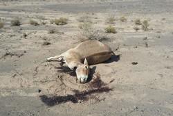 حیات وحش نیازمندمتخصص است/محیط طبیعی اولویت سازمان محیط زیست نیست