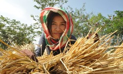 FAO highlights rural-urban connections to reduce hunger