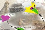زخم جاده بر پیکر یوز ایرانی؛ ارابه مرگ از سریعترین شکارچی سبقت گرفت