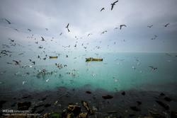 Fars Körfezi'nin güzel manzaralarından kareler