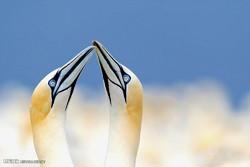 عکس های مسابقه عکاسی طبیعت نشنال جغرافیک