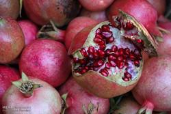 İran'ın Horaman bölgesinde nar hasadı başladı