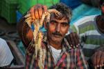 صید میگو در آب های شمال غرب خلیج فارس آزاد شد