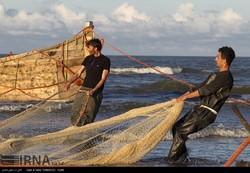 Photo depicts Iranian fishermen pulling a massive net near the northern city of Rasht on the southern Caspian Sea coast, October 15, 2017.