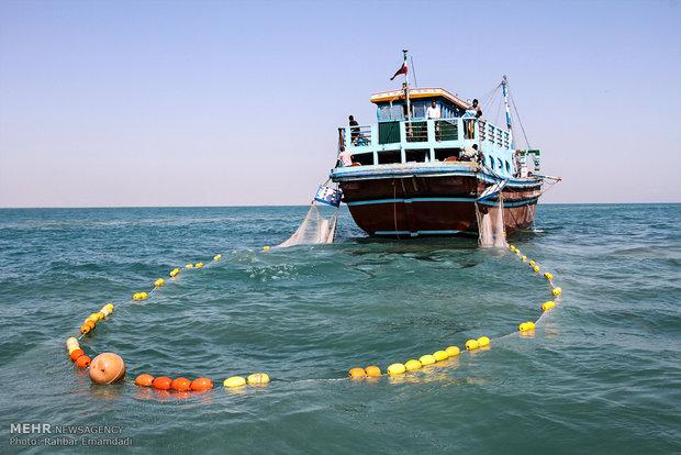 ۸۱۰ تن میگو در استان بوشهر صید شد/ افزایش ۲۷ درصدی صید